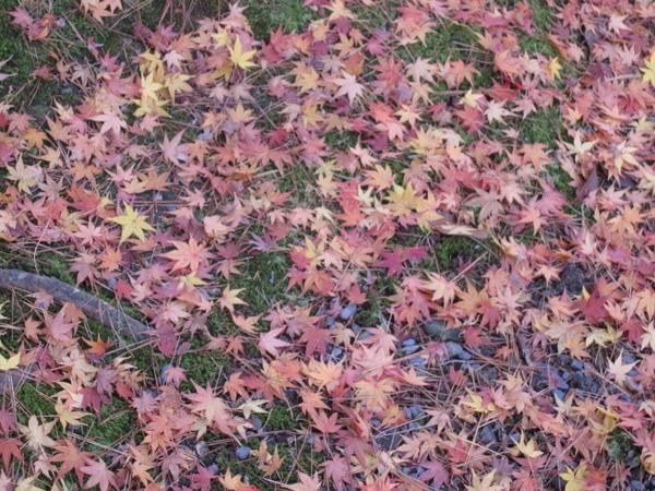 2008.11.26 京都--南禪寺 (21).JPG