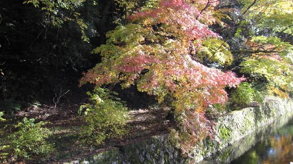 2008.11.26 京都--哲學之道 (32).JPG
