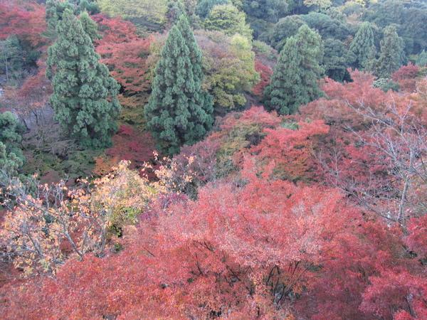 2008.11.26 京都--清水寺 (71).JPG