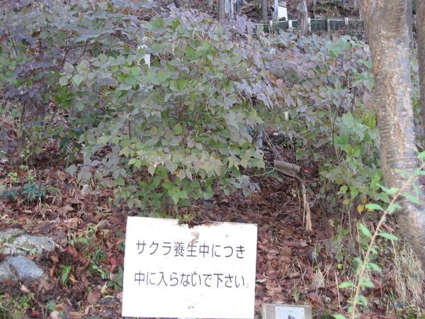 2008.11.26 京都--清水寺 (137).JPG
