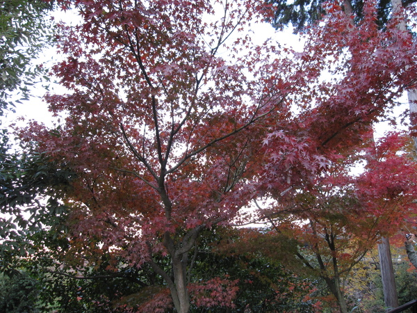 2008.11.26 京都--清水寺 (143).JPG