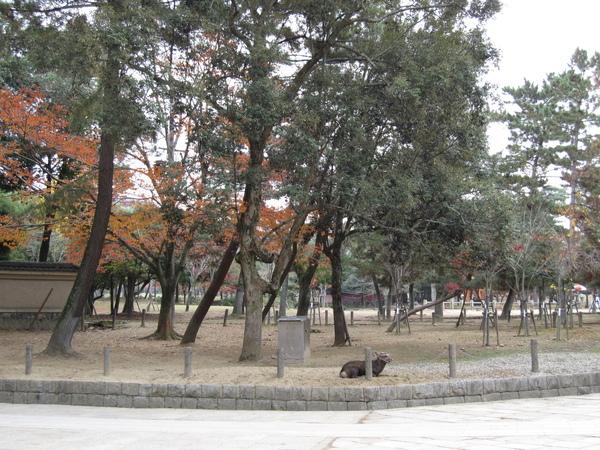 2007.11.27 奈良-- 東大寺 (16).JPG