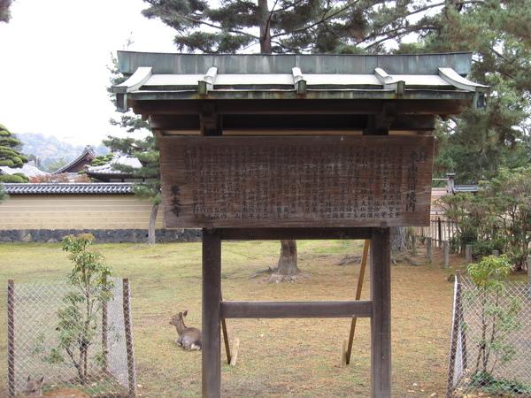 2007.11.27 奈良-- 東大寺 (23).JPG