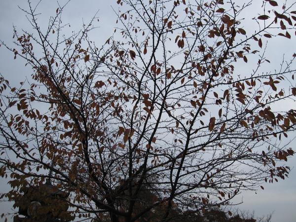 2007.11.27 奈良-- 興福寺 (31).JPG
