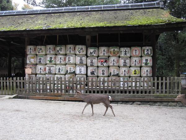 2008.11.27 奈良--春日大社 (22).JPG