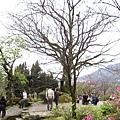 99.02.20 陽明山春賞櫻(50).JPG