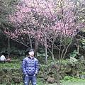 99.02.20 陽明山春賞櫻(55).JPG