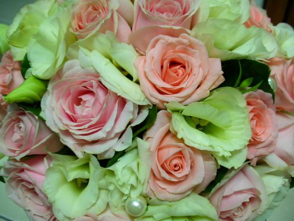 較小朵的是卡蜜拉玫瑰