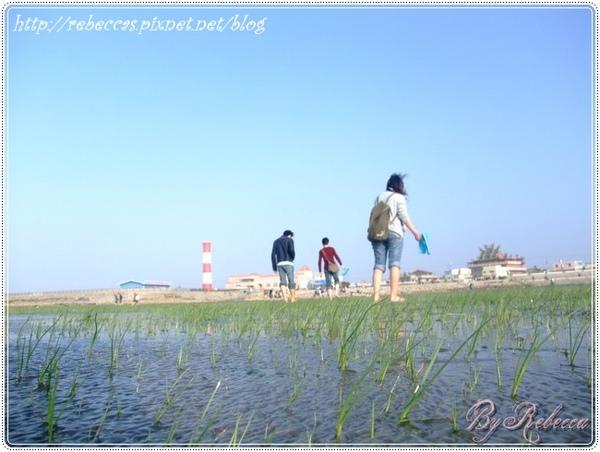0207_2031蘊藏豐富資源的濕地.JPG