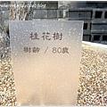 0208_2012桂花真的很清香.JPG
