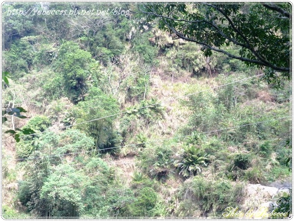 222_0091其實我是要照白線  聽說是彌猴的專用線道.JPG