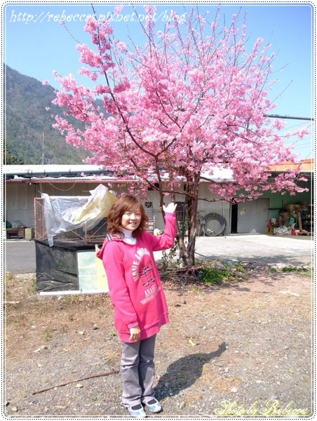 221_0017意外發現一株盛外的山櫻花.JPG