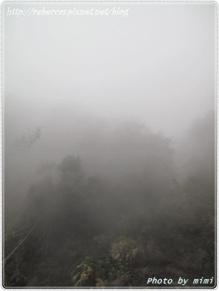 221_0106前往奮起湖的路線起大霧.JPG