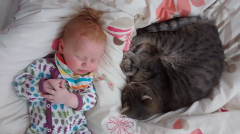 cats-babies-web.jpg