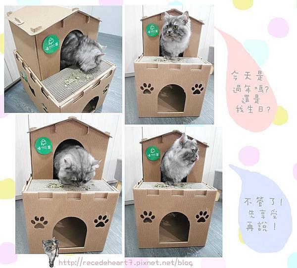 貓草圖.jpg