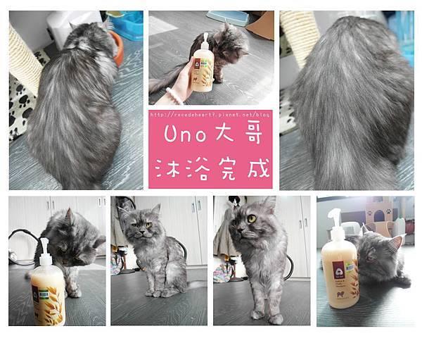 uno完成 (Copy).jpg