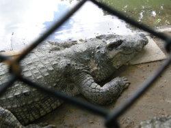 day02_05.大象主題樂園之鱷魚.JPG