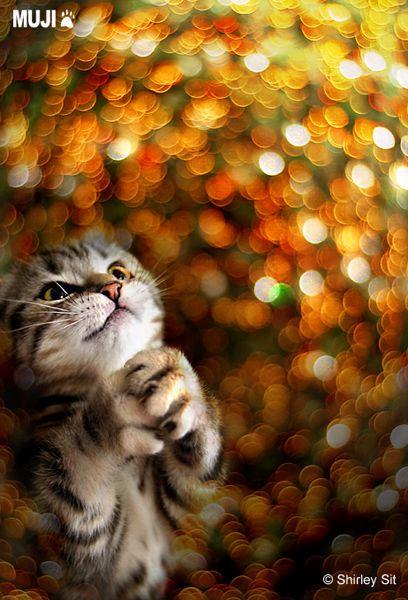 祈禱貓.bmp