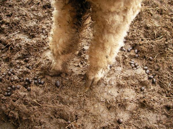 都是大便跟爛泥巴!