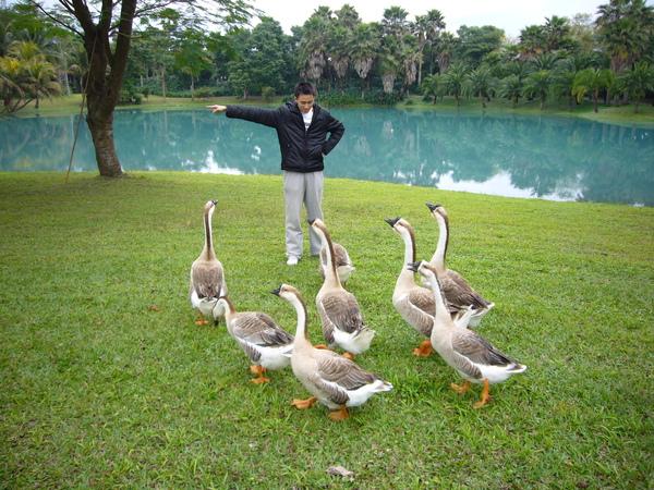 我可以指揮鵝ㄟ!!