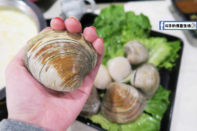 永和火鍋-高湯鍋 牛奶貝跟手一樣大
