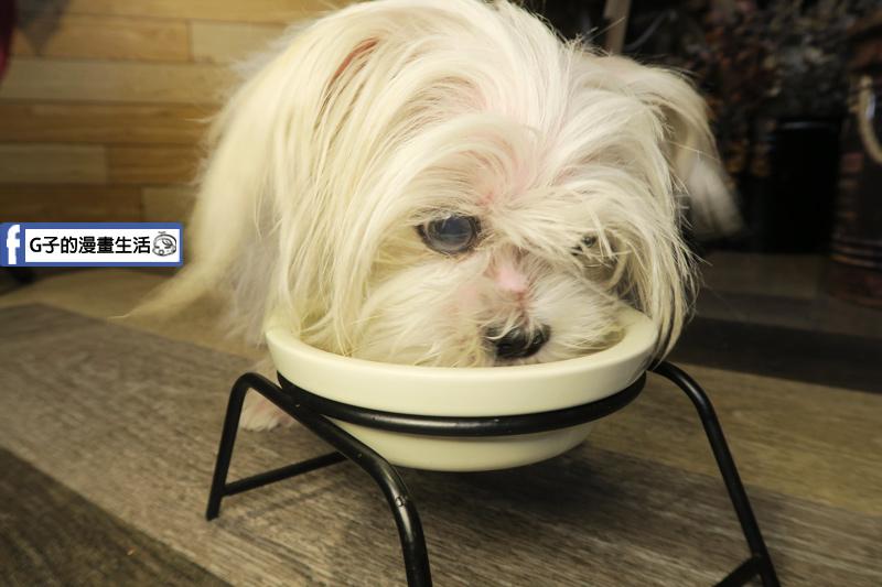 中和寵物餐廳-Dog Boss寵物友善餐廳,寵物鮮食有墊高架子 狗狗脖子不會酸