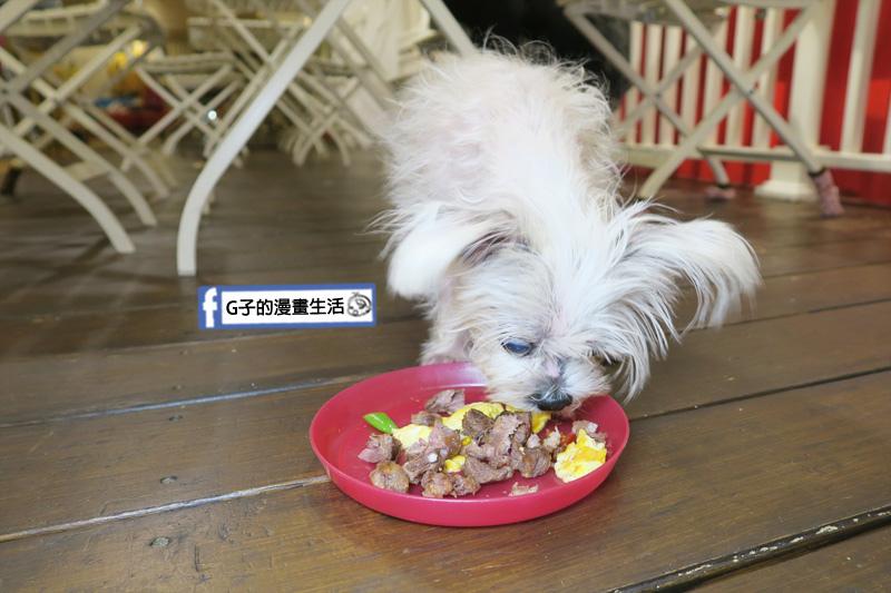 豐宇親子寵物友善餐廳 寵物餐-YUKI吃的超開心