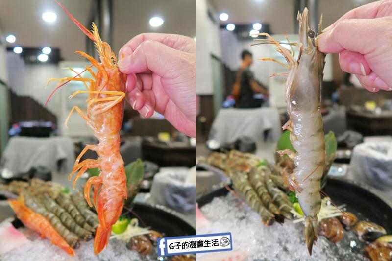 蘆洲火鍋 極禾優質鍋物蘆洲店 超值海陸雙人餐 天使紅蝦 海大蝦 超大