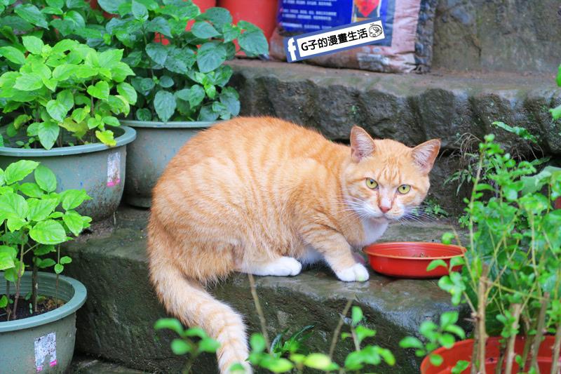 G子X哈旅行 台北包車一日遊.貓