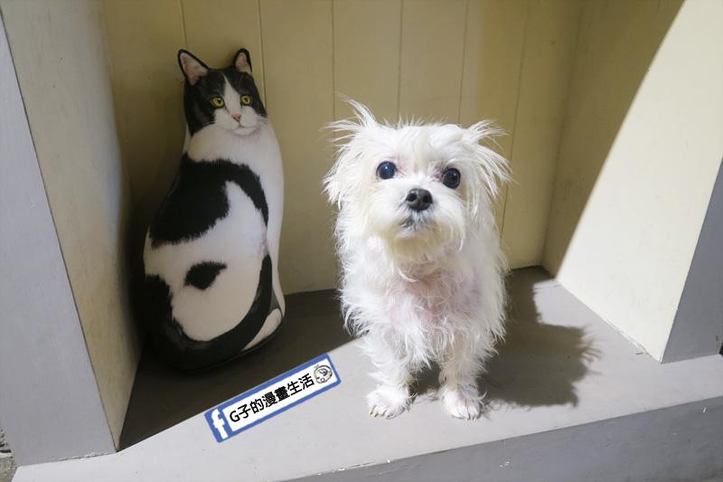 貓子曬太陽 永和早午餐寵物友善 YUKI