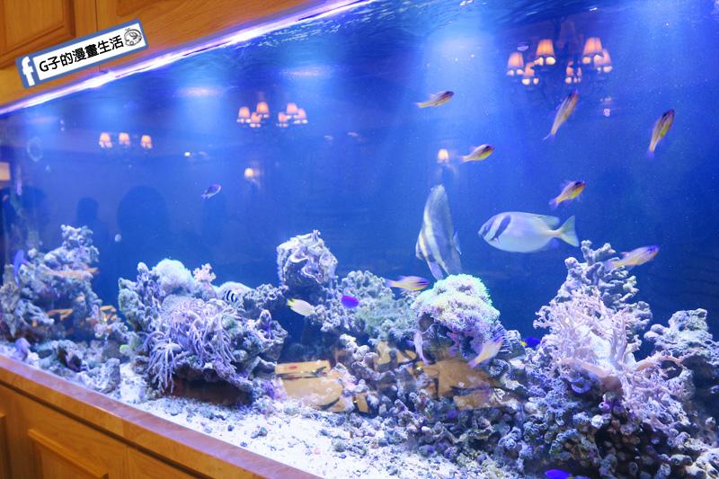 新莊慕拉諾義式餐廳 來到海底世界