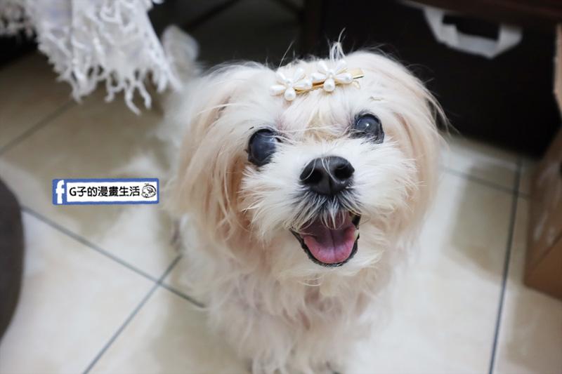 起來MoaUP.寵物毛小孩.毛孩每日健康賞.美毛好膚質賞.狗狗