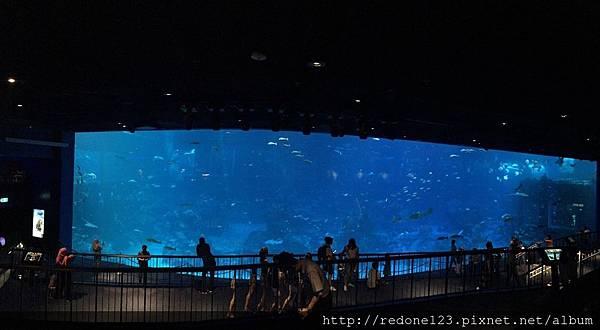 180423看魚療癒開心購物日_180516_0063.jpg