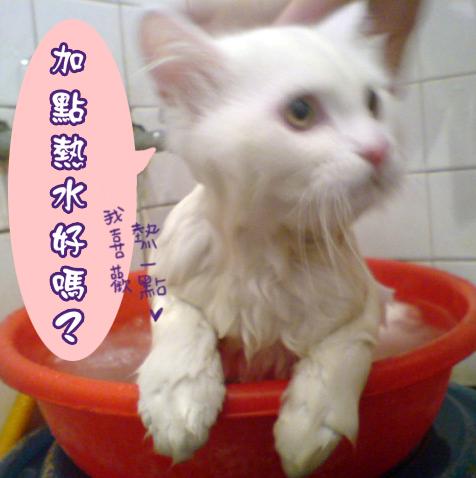 洗澡記01.jpg