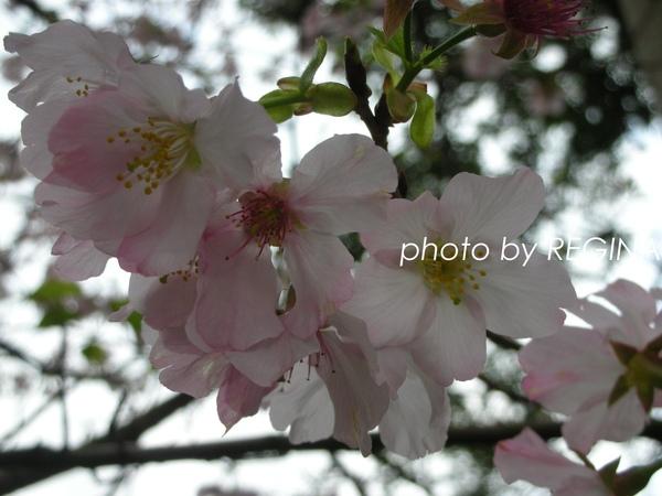 9803-4 淡水天元宮_0004.jpg