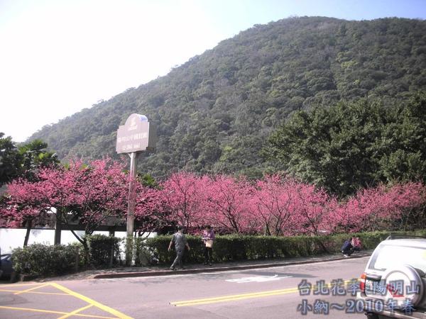 9901-22 陽明山花季_0031.jpg