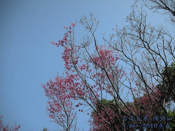 9901-22 陽明山花季_0001.jpg