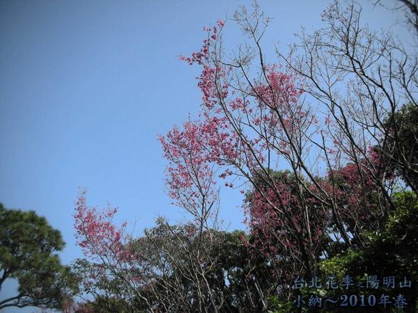 9901-22 陽明山花季_0002.jpg