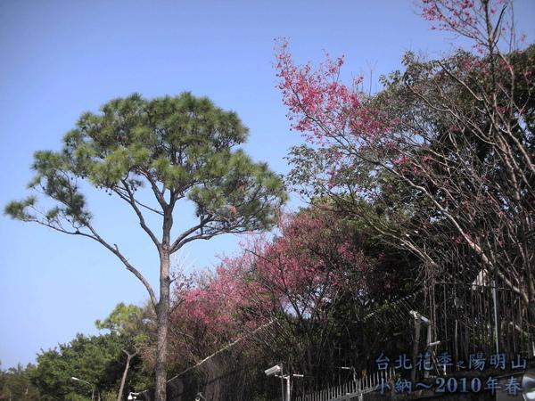 9901-22 陽明山花季_0004.jpg