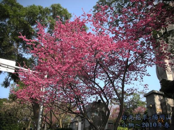 9901-22 陽明山花季_0007.jpg