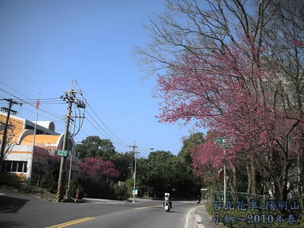 9901-22 陽明山花季_0008.jpg
