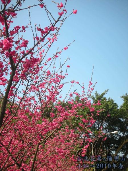 9901-22 陽明山花季_0022.jpg