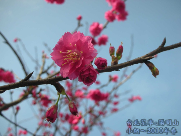 9901-22 陽明山花季_0023.jpg