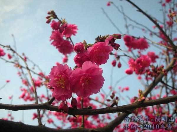 9901-22 陽明山花季_0024.jpg