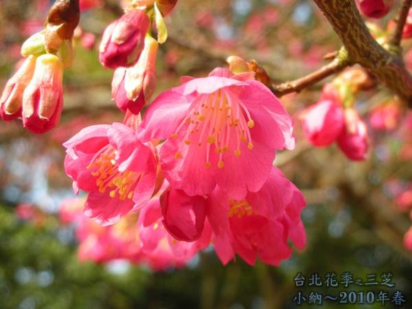 9901-22 陽明山花季_0086.jpg