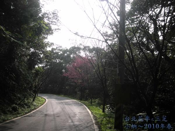 9901-22 陽明山花季_0039.jpg