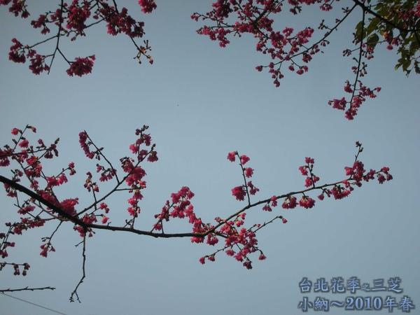 9901-22 陽明山花季_0053.jpg