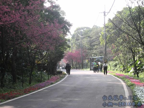9901-22 陽明山花季_0059.jpg