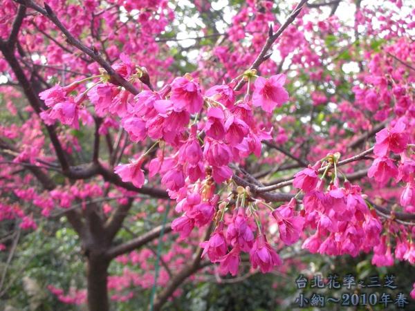 9901-22 陽明山花季_0061.jpg