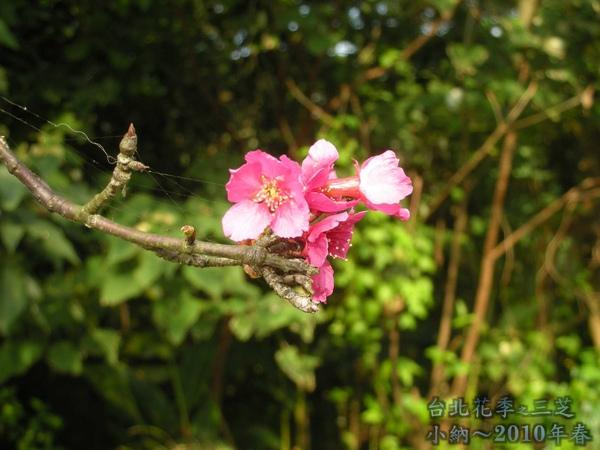 9901-22 陽明山花季_0072.jpg